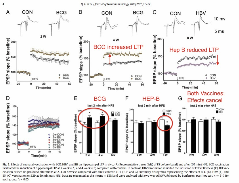 Brain Development Influenced By Immune >> Hep B And Bcg Vaccines Affect Brain Development By Immune Activation