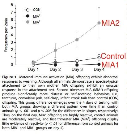 monkey separation behavior copy