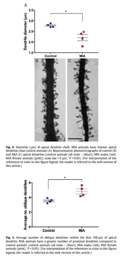 Neuron-morphology